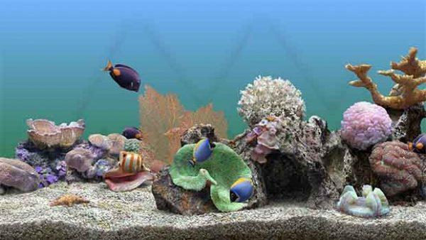 SereneScreen Marine Aquarium 3.3.6369 + Crack